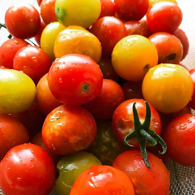 朝一トマト