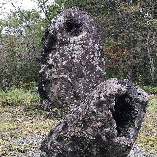 管状溶岩樹型️^_^
